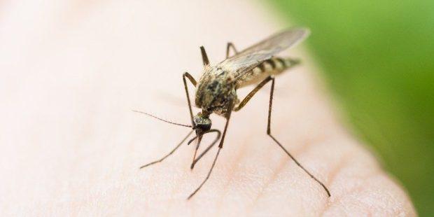 elite-daily-Zika-Virus-800x400